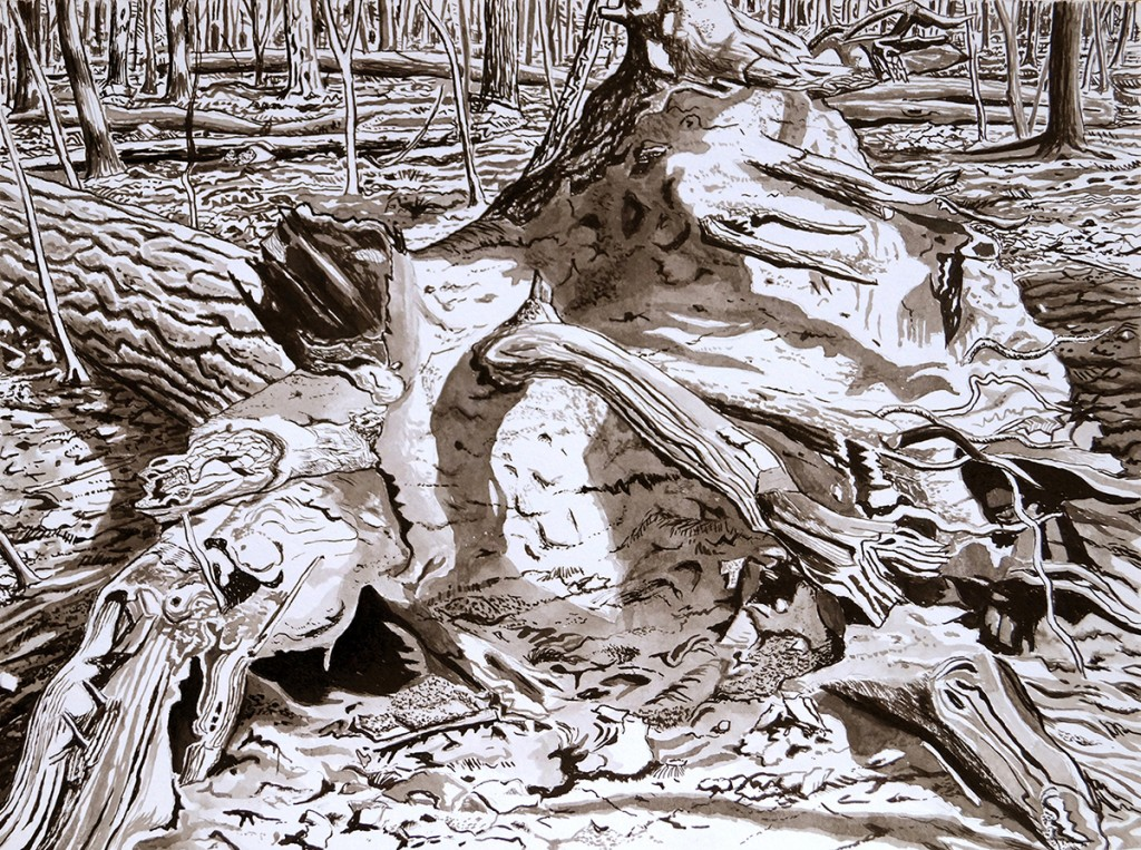 1Wurzel eines liegenden Baumes, 18,5x25cm,2017